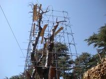 Les cèdres du Liban, place de trinité ou arbre de Lamartine, ont découpé Cedar Wood, forêt des cèdres de Dieu, Liban Photos libres de droits