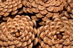 Les cônes de pin Photos libres de droits