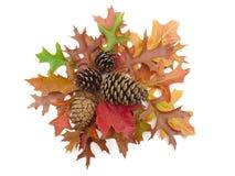 Les cônes de pin et l'automne réel part sur le blanc Image stock