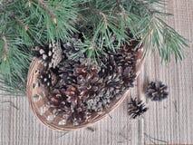 les cônes et la branche de pin ont mangé sur la table images libres de droits