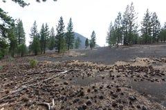 Les cônes et le bois de flottage de pin salissent la cendre sur des cônes de cendre en parc national volcanique de Lassen Images stock