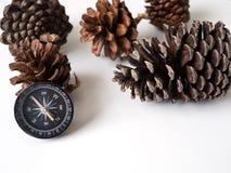 Les cônes de boussole et de pin sur le voyage blanc de fond voyagent Images libres de droits