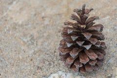 Les cônes de pin Image libre de droits
