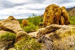 Les cactus, les arbustes et les grands roches et rochers en Arizona abandonnent images libres de droits