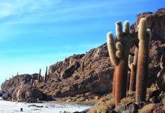 Les cactus sur Isla Incahuasi Photos libres de droits