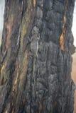 Les caméléons changent la couleur sur la partie brûlée de tronc d'arbre images libres de droits