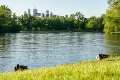 Les canards accumulent la récréation de fond de paysage urbain de parc aquatique d'herbe de pelouse Image libre de droits