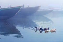 Les canards s'approchent des bateaux sur la rivière sacrée le Gange au matin brumeux froid d'hiver Images stock