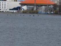 Les canoës emballent dans la ville images libres de droits