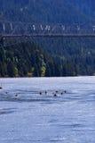 Les canoës et les kayaks parfaits de navigation sur le fleuve Columbia scénique se gorgent image stock
