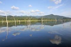 Les carcasses en bois sur l'eau et le ciel bleu reflète la surface dans le barrage de Srinakarin Images libres de droits