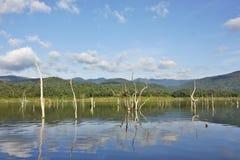 Les carcasses en bois sur l'eau et le ciel bleu reflète la surface dans le barrage de Srinakarin Photos stock