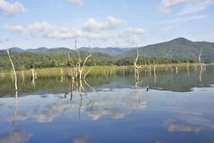 Les carcasses en bois sur l'eau et le ciel bleu reflète la surface dans le barrage de Srinakarin Image libre de droits