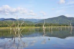 Les carcasses en bois sur l'eau et le ciel bleu reflète la surface dans le barrage de Srinakarin, Kanjanaburi Image stock