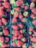 Les cartons de fraises fraîches et belles attendent pour enchanter leurs consommateurs d'été photos stock