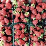 Les cartons de fraises organiques fraîches et délicieuses attendent pour enchanter leurs consommateurs d'été photos stock