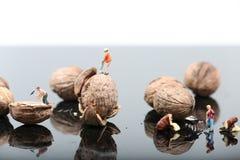 Les casse-noix dans l'environnement occupé photos libres de droits