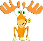 Les cerfs communs d'une manière amusante avec la fleur Photographie stock libre de droits