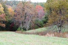 Les cerfs communs dans le domaine des arbres avec l'automne ont coloré des feuilles Images stock