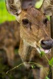 Les cerfs communs demandent à des humains de conserver la nature Images libres de droits