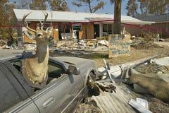 Les cerfs communs en fenêtre de voiture et débris devant la maison ont fortement frappé par ouragan Ivan à Pensacola la Floride Image libre de droits