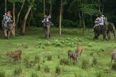 Les cerfs communs et les touristes sur l'éléphant dans le Forest Park dans chitwan, Népal Photos libres de droits