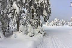 Les cerfs communs tiennent - support d'arbre - la tour de surveillance en montagnes Image libre de droits