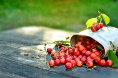 Les cerises organiques fraîches en métal peuvent sur le fond en bois de table avec des lumières du soleil Photo stock