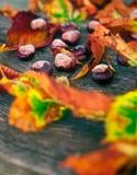 Les châtaignes mûres se ferment sur la table en bois photo stock