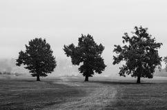 Les chênes centenaires image libre de droits
