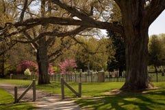 Les chênes majestueux gardent un cimetière photographie stock libre de droits