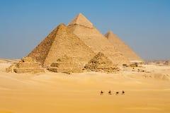 Les chameaux rayent des pyramides toutes de promenade Photographie stock libre de droits