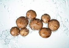 Les champignons arrosent l'éclaboussure images libres de droits