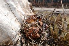 Les champignons cachés Image stock