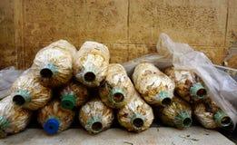 Les champignons cultivent Photo libre de droits