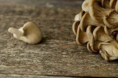Les champignons d'huître se sont embranchés sur le foyer sélectif modifié la tonalité par bureau en bois Images libres de droits