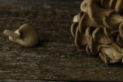 Les champignons d'huître se sont embranchés sur le foyer sélectif modifié la tonalité par bureau en bois Photographie stock