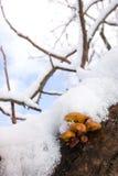 les champignons de couche neigent dessous Image libre de droits