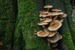 Les champignons de la forêt se développent sur le tronc Images stock