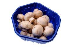 Les champignons de paris de champignons se trouvent sur un plateau bleu, d'isolement sur un fond blanc Photo stock