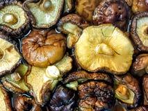 Les champignons de shiitak? secs imbibent dans l'eau photos libres de droits