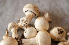 Les champignons sales récemment récoltés ont écarté sur le papier, cru et le healt photo libre de droits