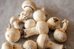 Les champignons sales récemment récoltés ont écarté sur le papier, cru et le healt photographie stock