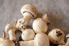 Les champignons sales récemment récoltés ont écarté sur le papier, cru et le healt image stock