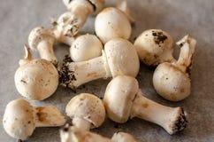 Les champignons sales récemment récoltés ont écarté sur le papier, cru et le healt photographie stock libre de droits