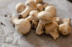 Les champignons sales récemment récoltés ont écarté sur le papier, cru et le healt photo stock