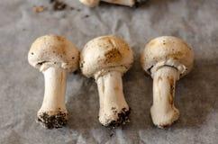 Les champignons sales récemment récoltés ont écarté sur le papier, cru et le healt photos stock