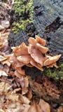 Les champignons se développent sur le tronçon d'arbre photo stock