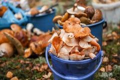 Les champignons se ferment photos libres de droits