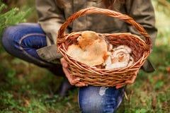 Les champignons sont beaux images libres de droits